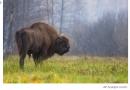 """Stumbrės žūtimi pasibaigusioje medžioklėje – Seimo, """"Grigeo"""", """"Biovelos"""" veidai – BNS TEMA"""